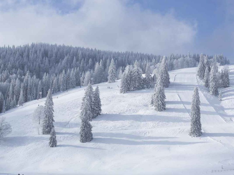 Winterlandschaft in Menzenschwand_High Res_3739